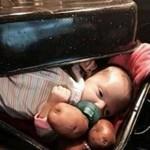 bayi-di-panggang