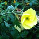 Keajaiban Alam, Bunga Ini Mekar Saat Terdengar Suara Adzan YOUTUBE
