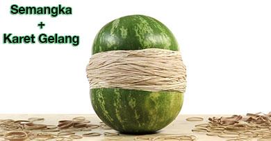 Semangka dililit karet