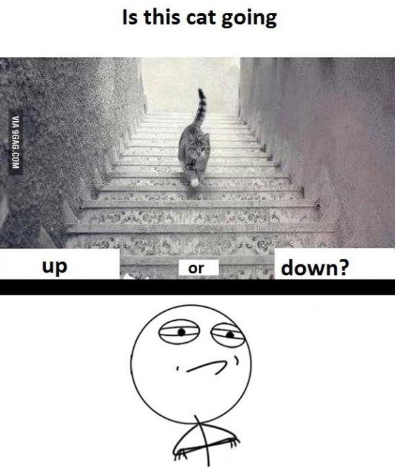 Kucingnya Lagi Naik Atau Turun Ya - (c)9gag.com