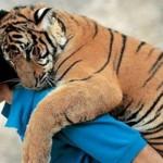 Penyelamatan hewan oleh manusia