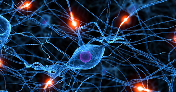 Neuron Otak adalah Kanibal