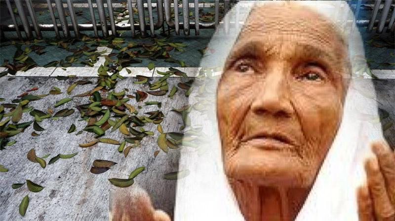Kisah Nenek Penjual Daun Melinjo