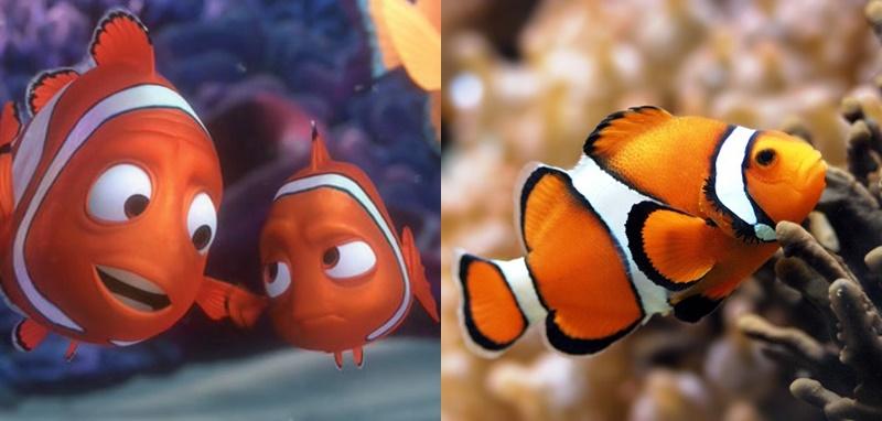Nemo dan Hewan Aslinya
