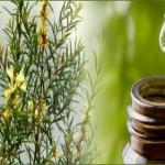 Tea Tree Oil [image source]