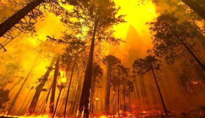 Inilah 5 Gambaran Masa Depan Bumi Kita dan Fakta ...